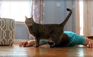Ինչպես է կատուն արձագանքում տիրոջ սուտմեռուկին