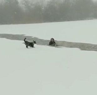 Ինչպես է կինը փրկում սառույցի տակ հայտնված շանը
