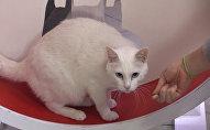«Էրմիտաժցի» կատուն կգուշակի Աշխարհի առաջնության արդյունքները