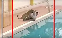 Леопард ворвался в школу в Индии