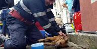 Ռումինացի հրշեջը փրկել է շան կյանքը