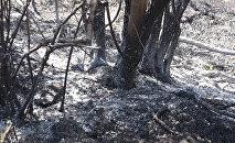 Խոսրովի անտառ