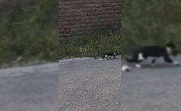 Ականատեսները կատվին օգնել են փրկել ձագերին՝ անվտանգ վայր տեղափոխելով նրանց