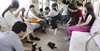 Աշխարհում առաջին «կատվային» գնացքը գործում է Ճապոնիայում