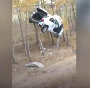 Автомобиль припарковался на дереве