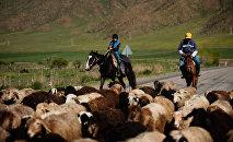 Հովիվներ